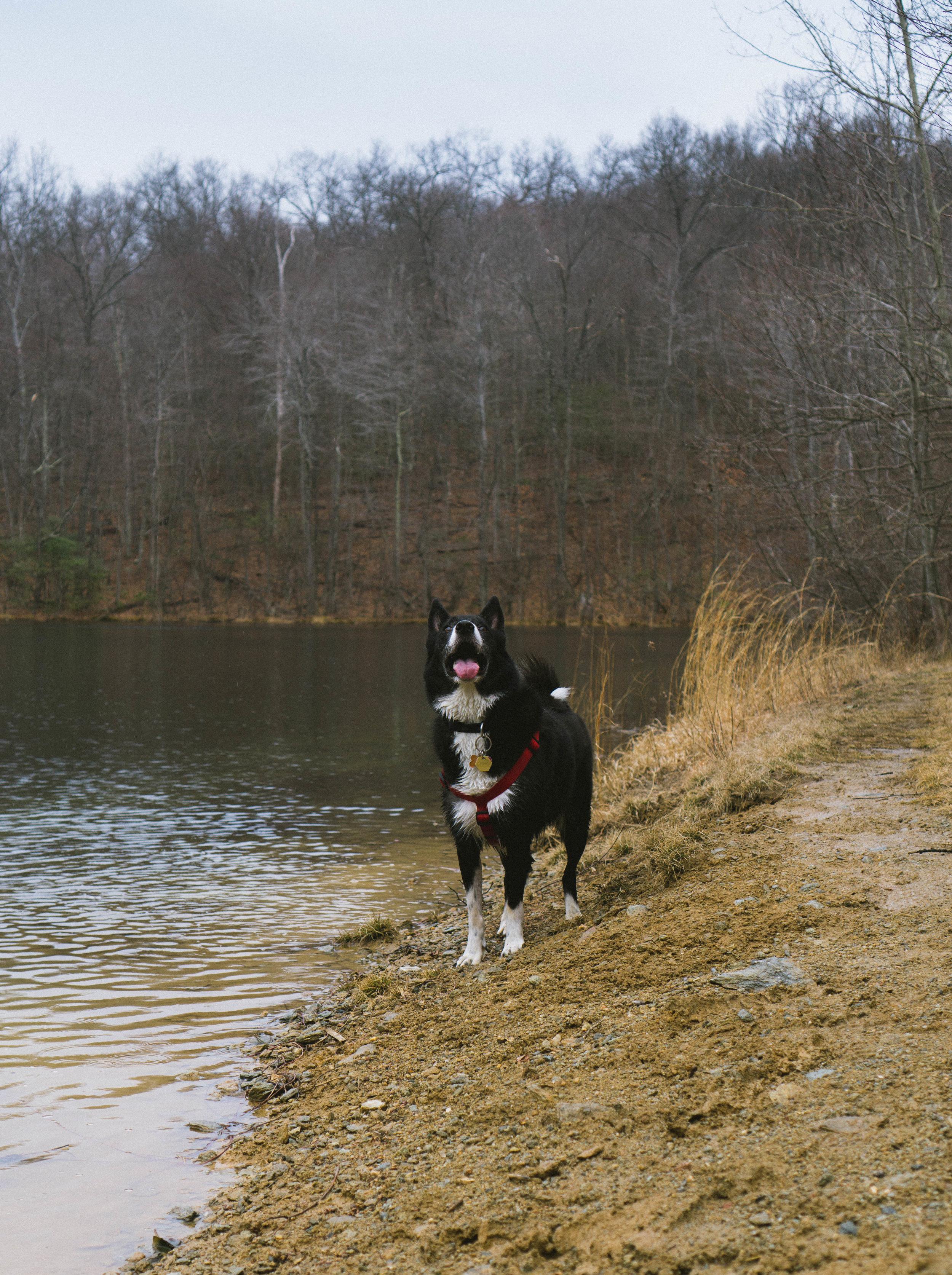 davidscotto happy dog.jpg