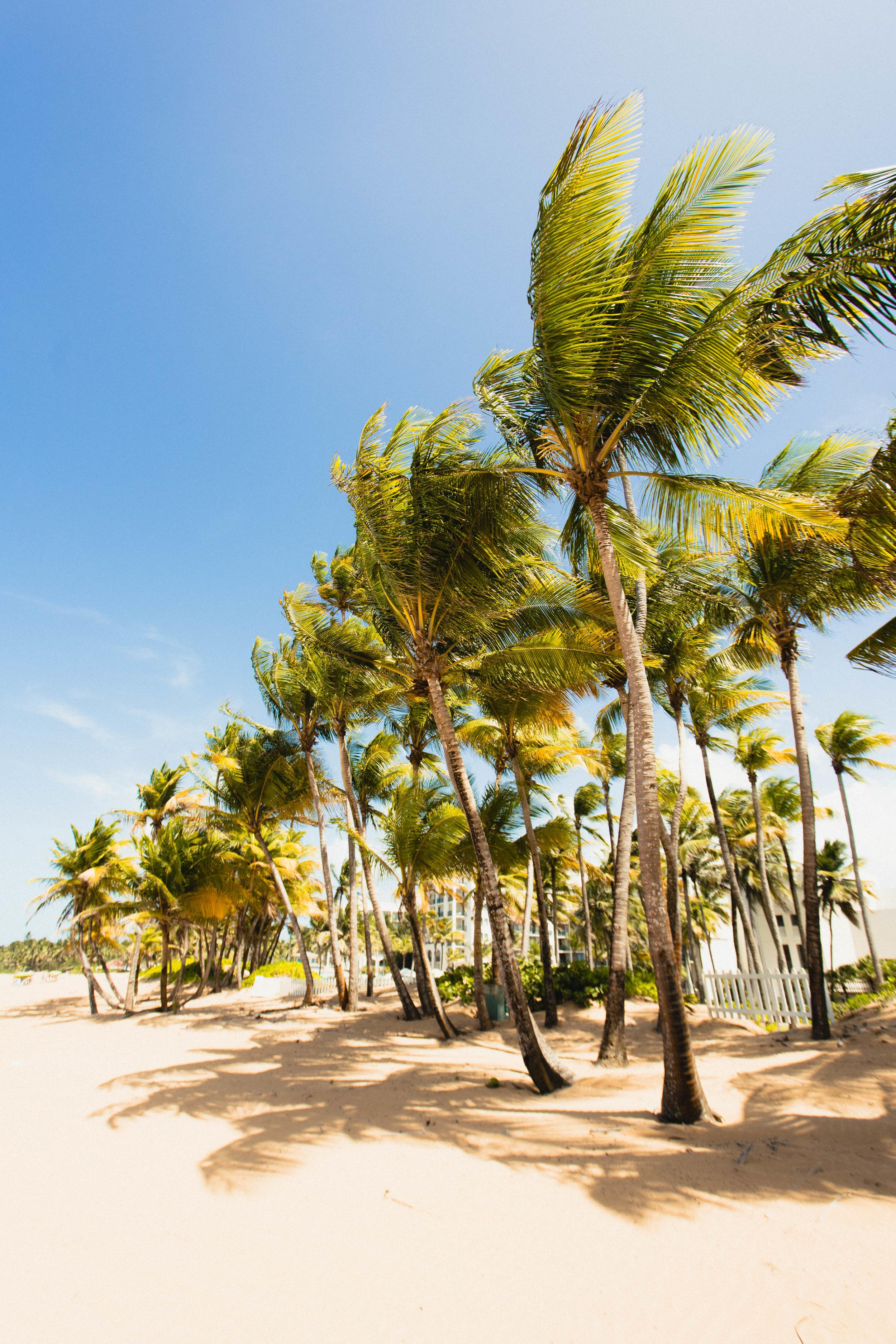 davidscotto palm trees.jpg