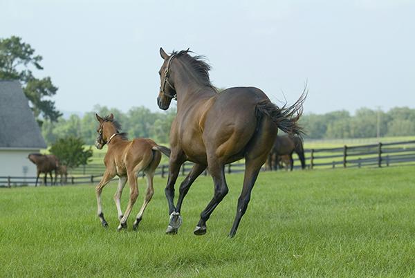 HorseFarm_600.png