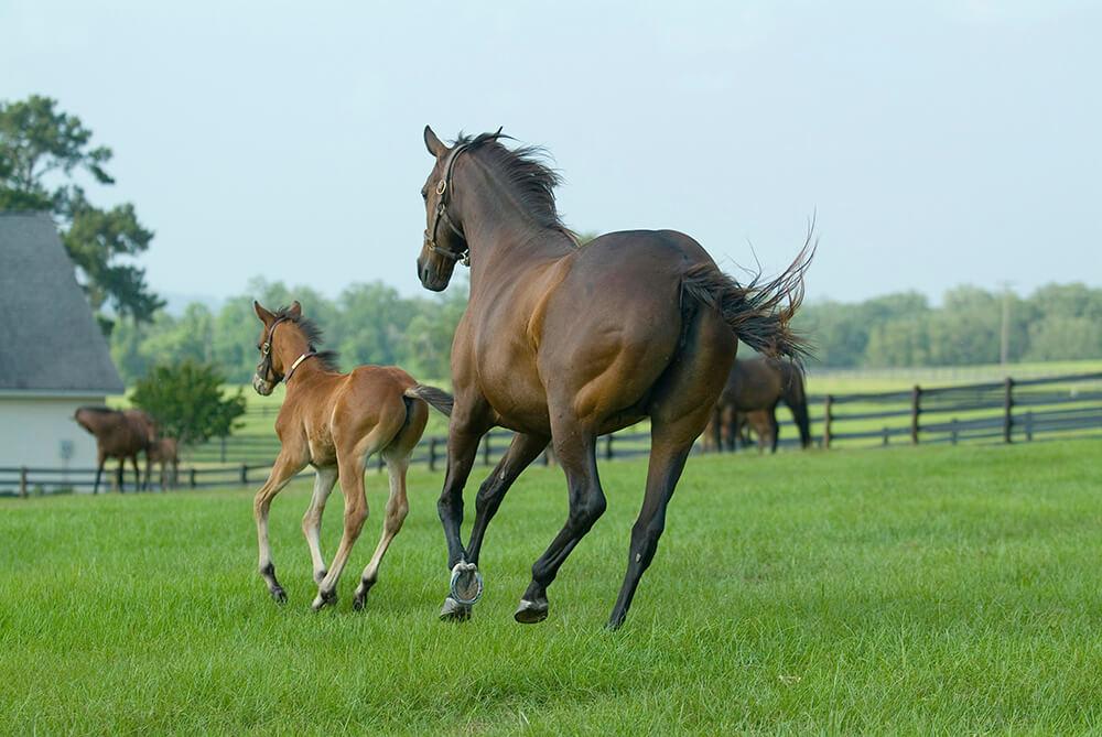 HorseFarm_Large.jpg