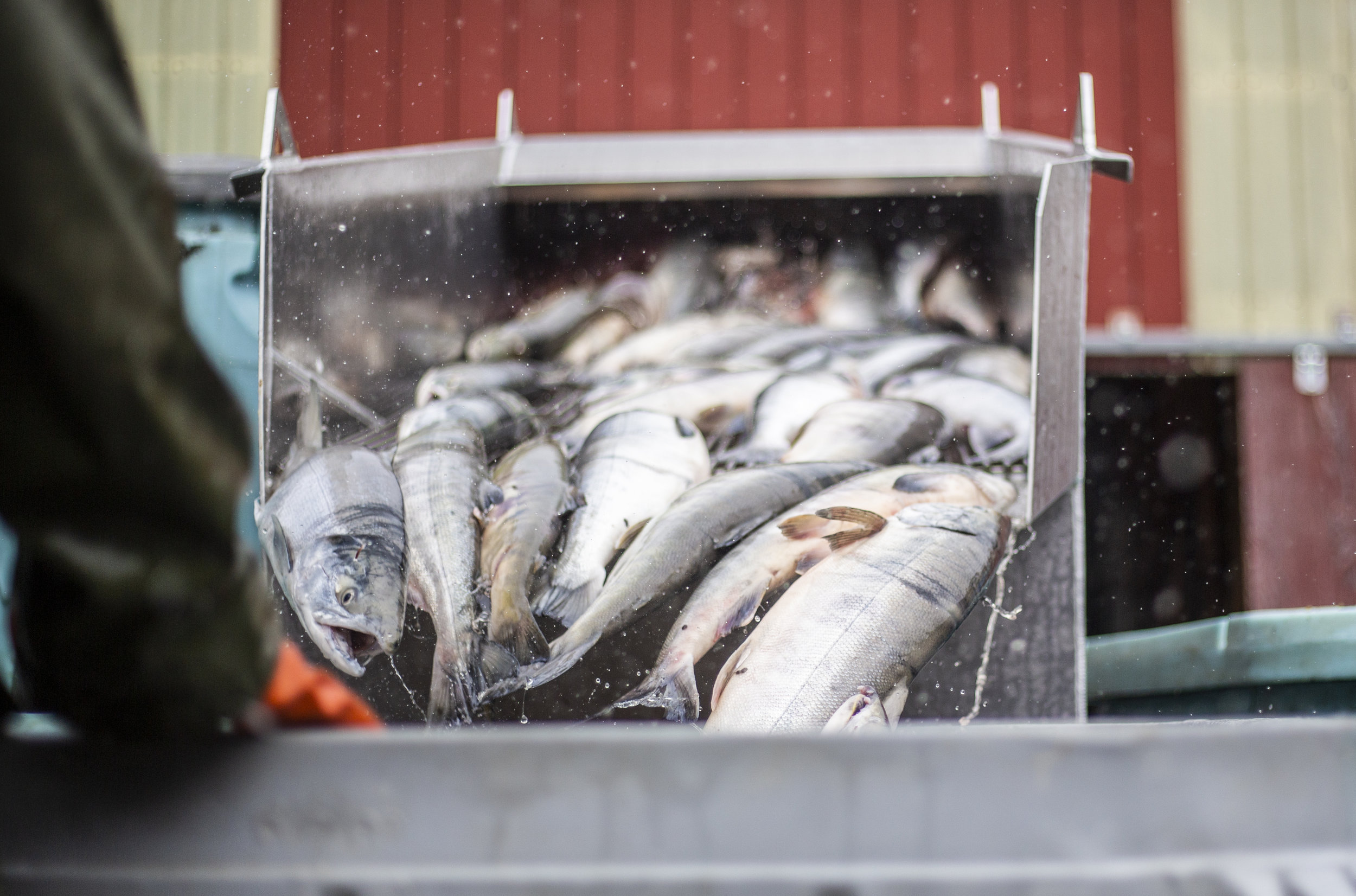 Fish cannery in Haines   Photo - Connor Gallagher