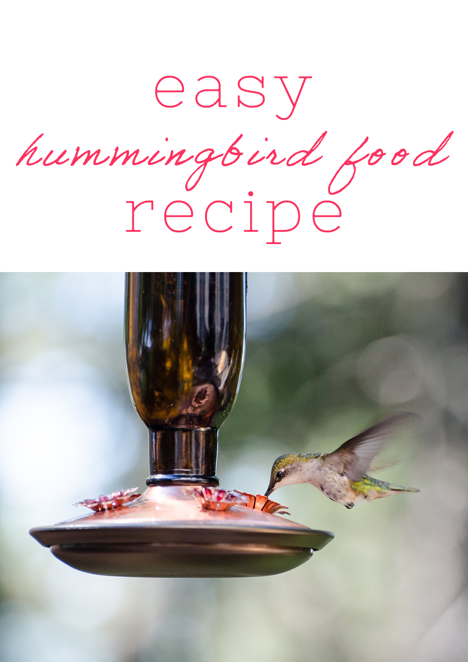 easy-hummingbird-food-recipe.png