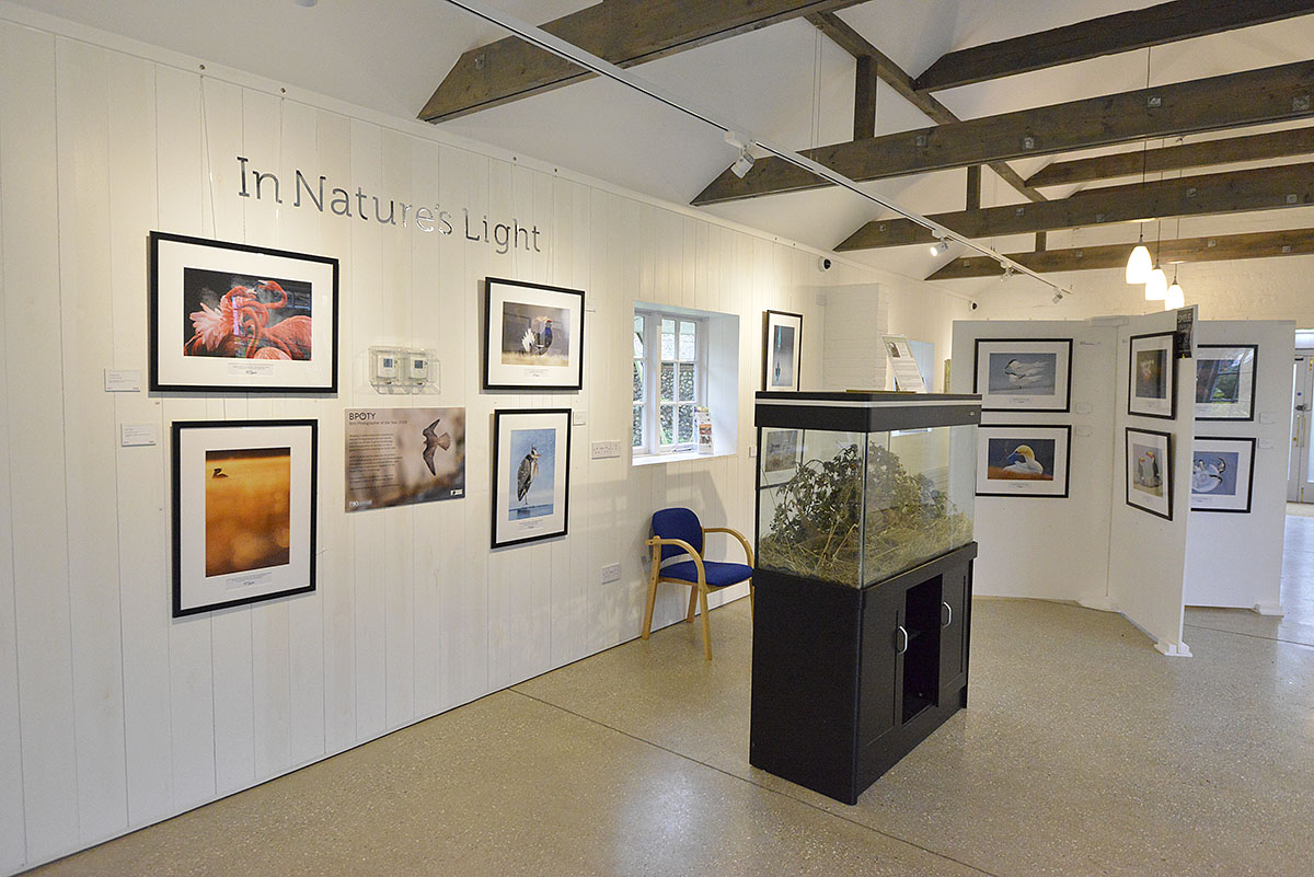 The Bird Photographer of the Year 2018 exhibition will be on display at Pensthorpe Bird and Wildlife Fair on 18th and 19th May.