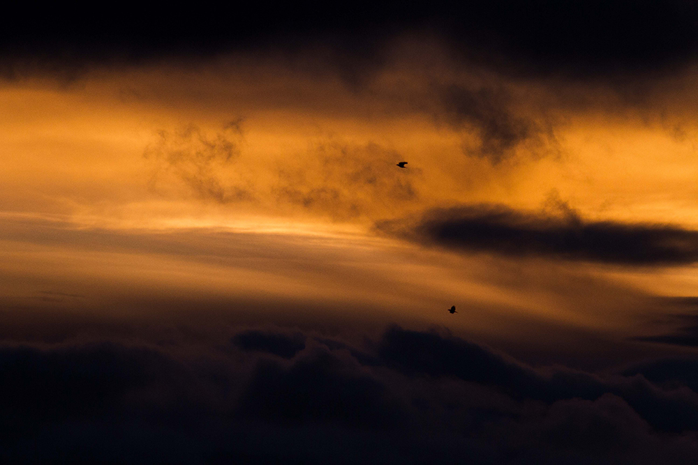Image taken by Freya Coursey, titled 'Clouds and corvids'