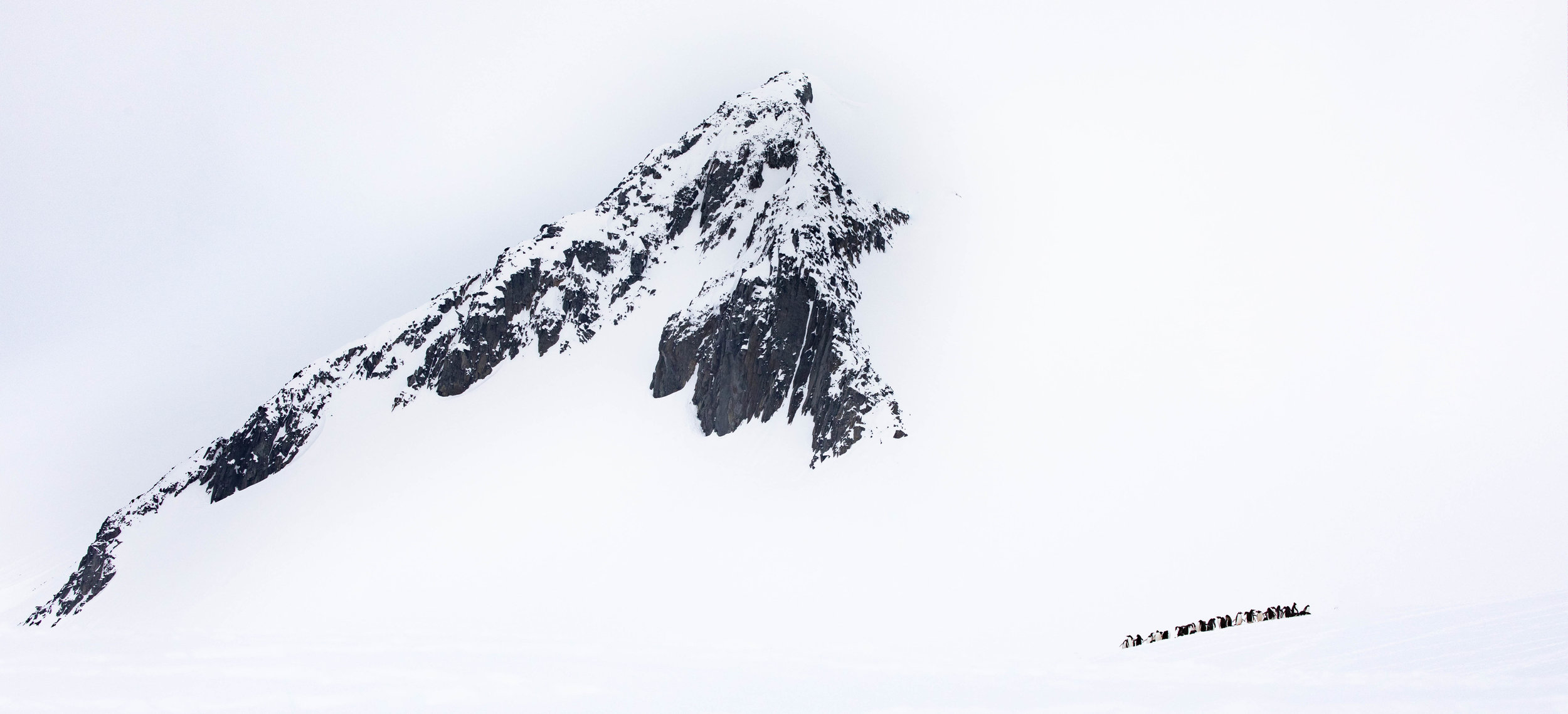 Mountain vs Adélie  Adélies are the smallest and most widespread species of penguin in Antarctica. I wanted to take an image showcasing the contrast between these small birds and their vast environment. In a world that is getting smaller for wildlife by the second, I find it comforting to remind myself that we all play a small but critical role how ecosystems much bigger than ourselves function. We can all make a difference.
