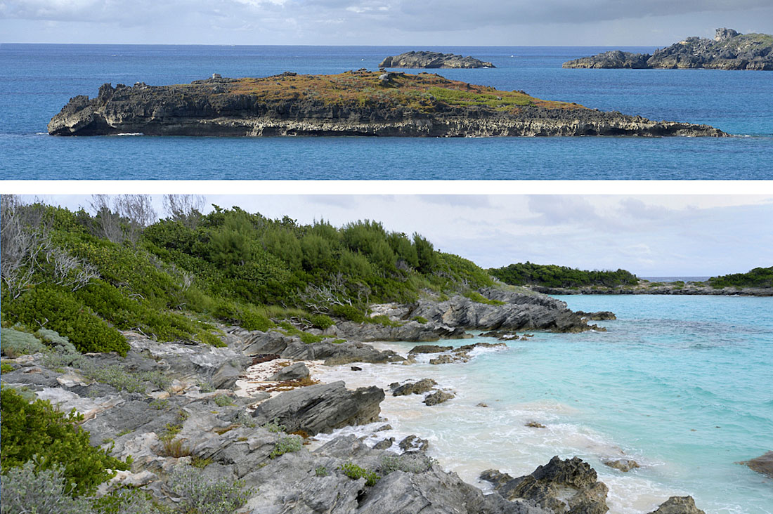The last remaining breeding haunts of the Cahow: tiny Green Island (above), prone to tidal-surge inundation, and restored Nonsuch Island (below) the species' new home. ©Paul Sterry/Nature Photographers Ltd