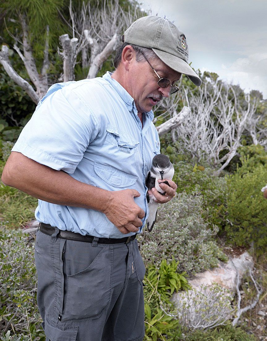 Jeremy Madeiros with a nest-prospecting Cahow. ©Paul Sterry/Nature Photographers Ltd