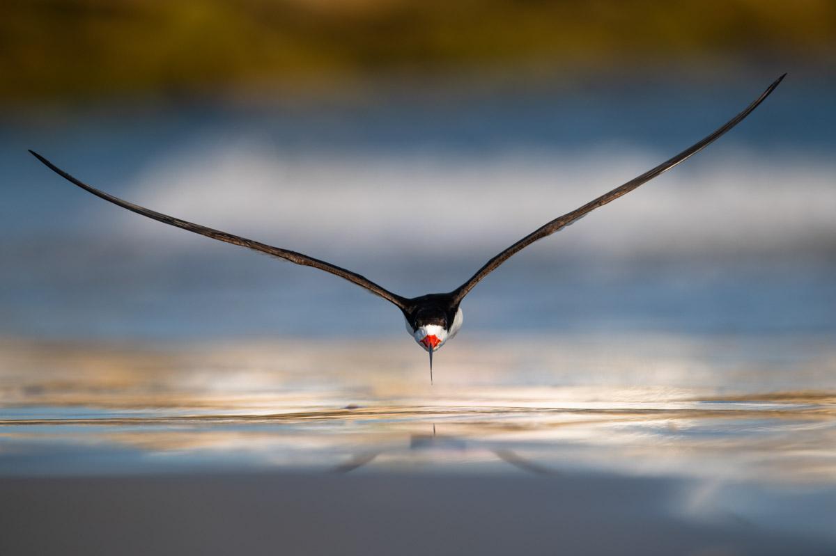NIKUNJ PATEL - BIRDS IN FLIGHT GOLD