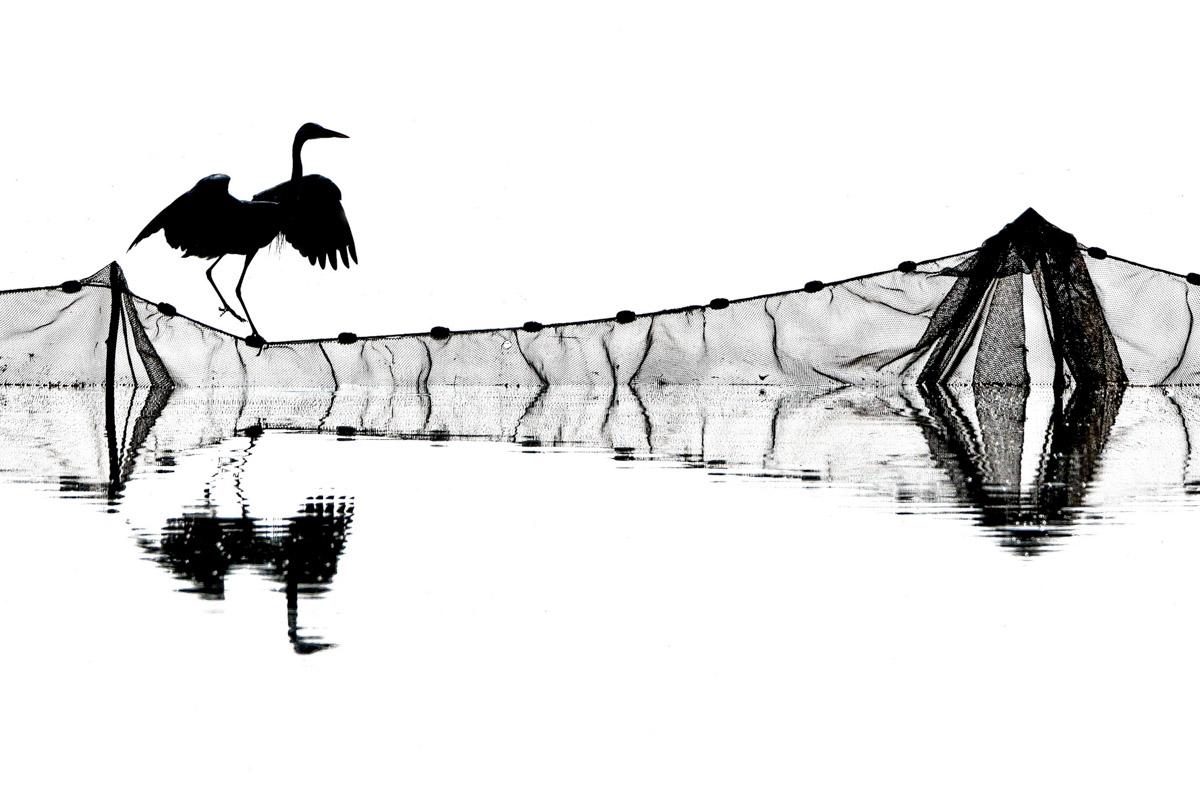 JOZSEF GERGELY - BIRD BEHAVIOUR SILVER