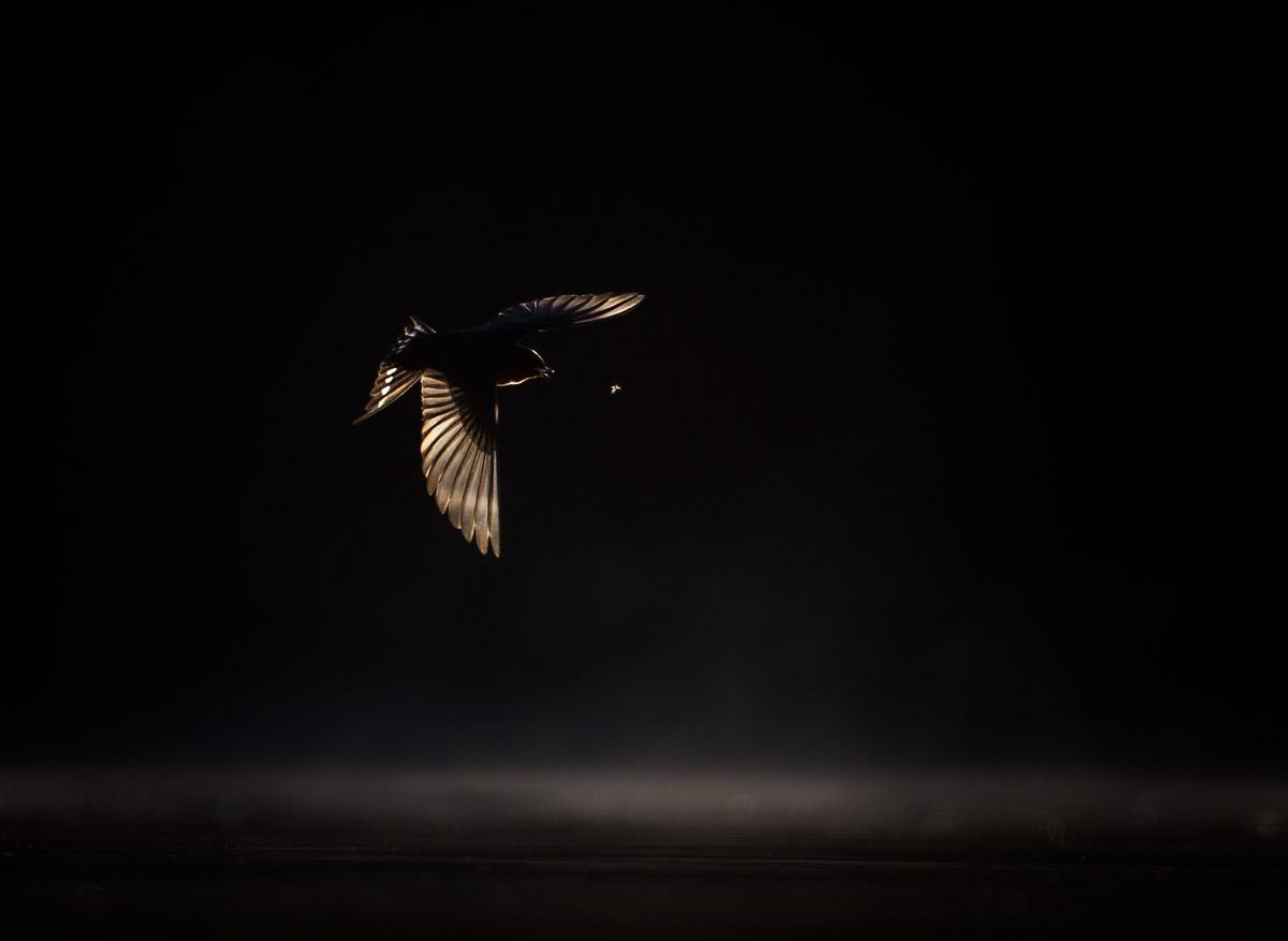 GEORGINA STEYTLER - BIRDS IN FLIGHT SILVER