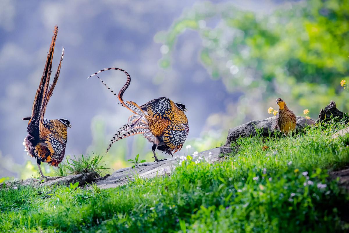 HU YI - BIRD BEHAVIOUR BRONZE