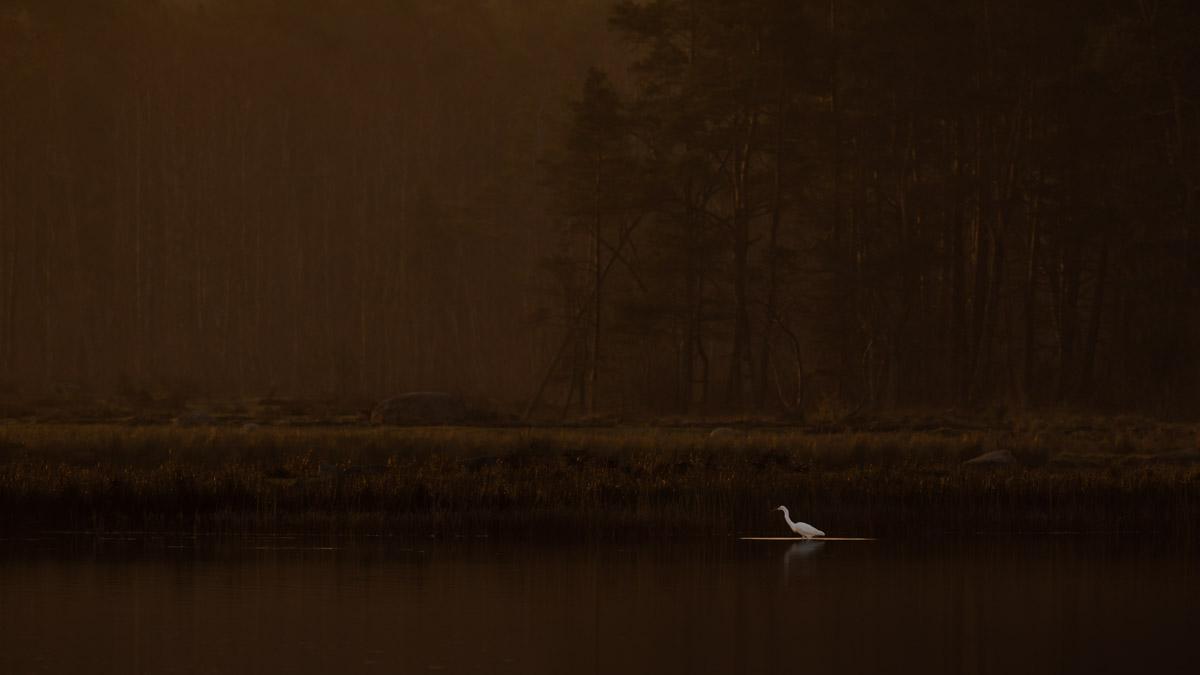 HANS OLSSON - BIRDS IN THE ENVIRONMENT