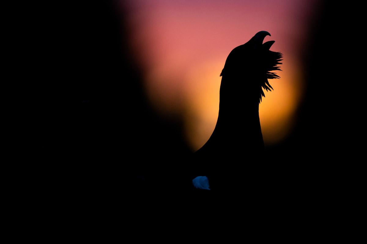ERIK BERK - BIRD BEHAVIOUR