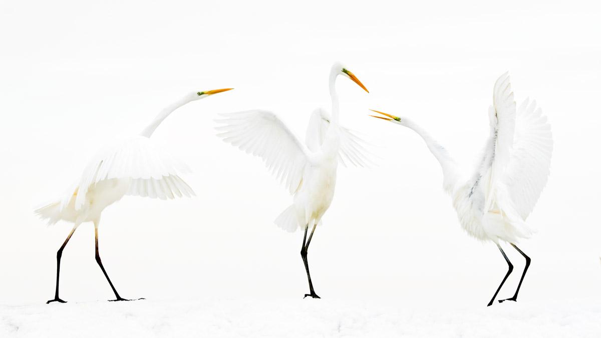 BENCE MATE - BIRD BEHAVIOUR