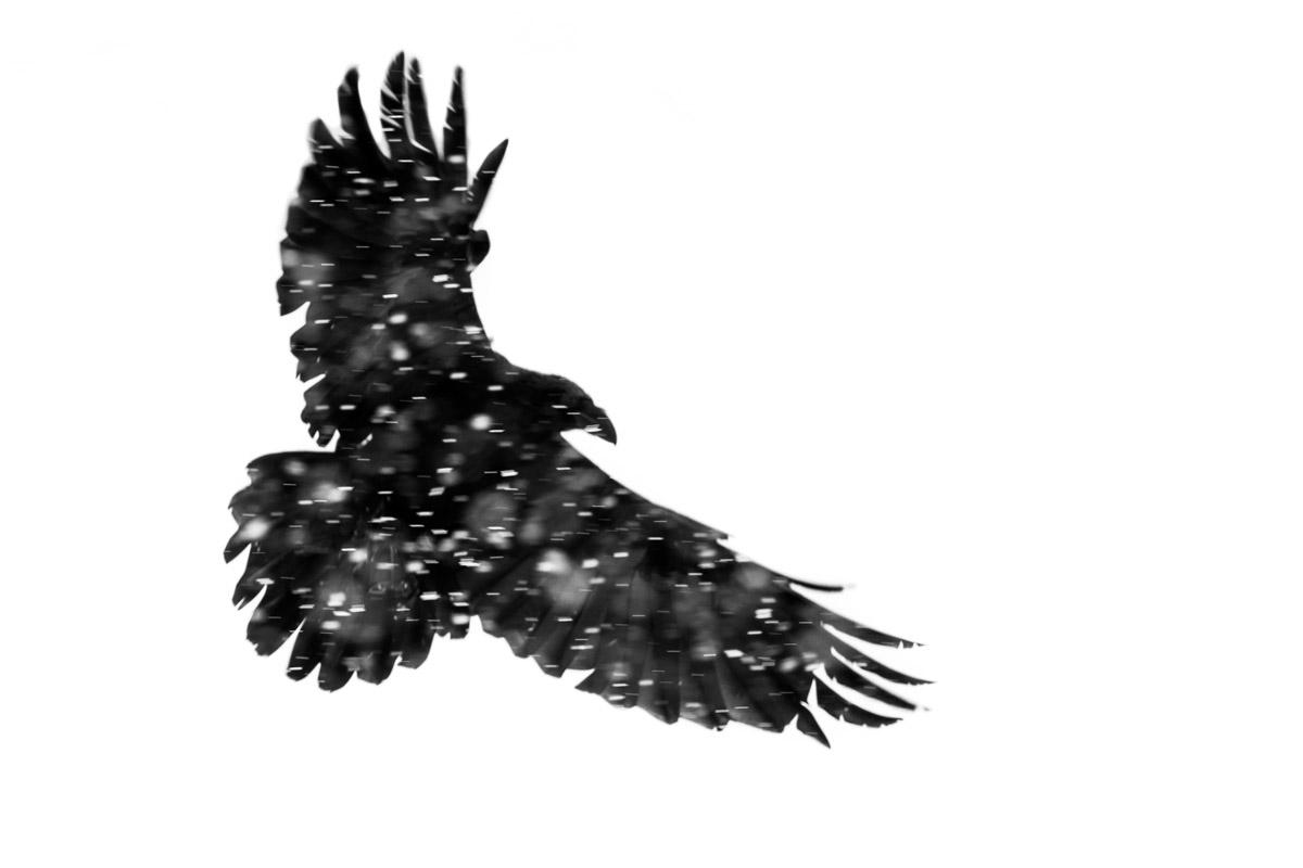 MOHAMMAD MURAD - BIRDS IN FLIGHT