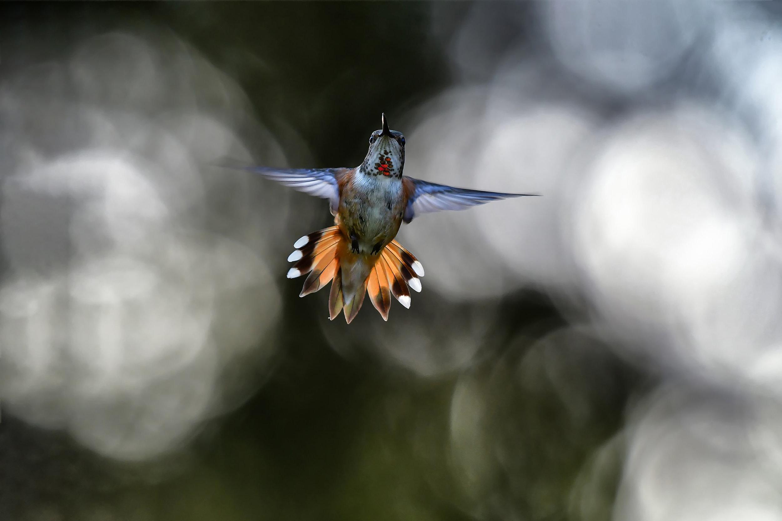 Birds in Flight Commended ©Shane Kalyne
