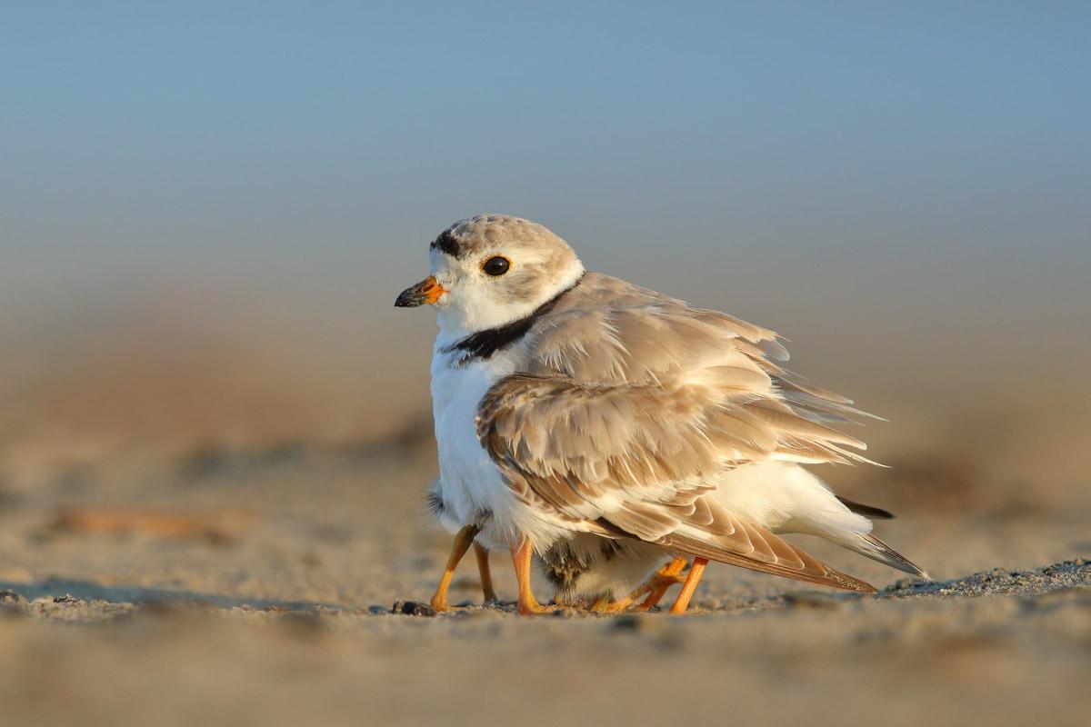 Bird Behaviour Commended ©Gail Bisson