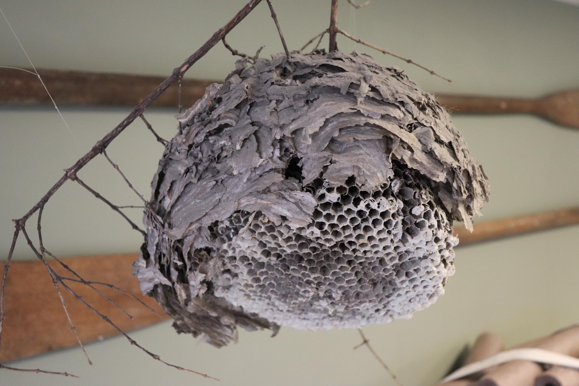 Beehive on display in Ranger Station (Photo By Simone Verria).jpg