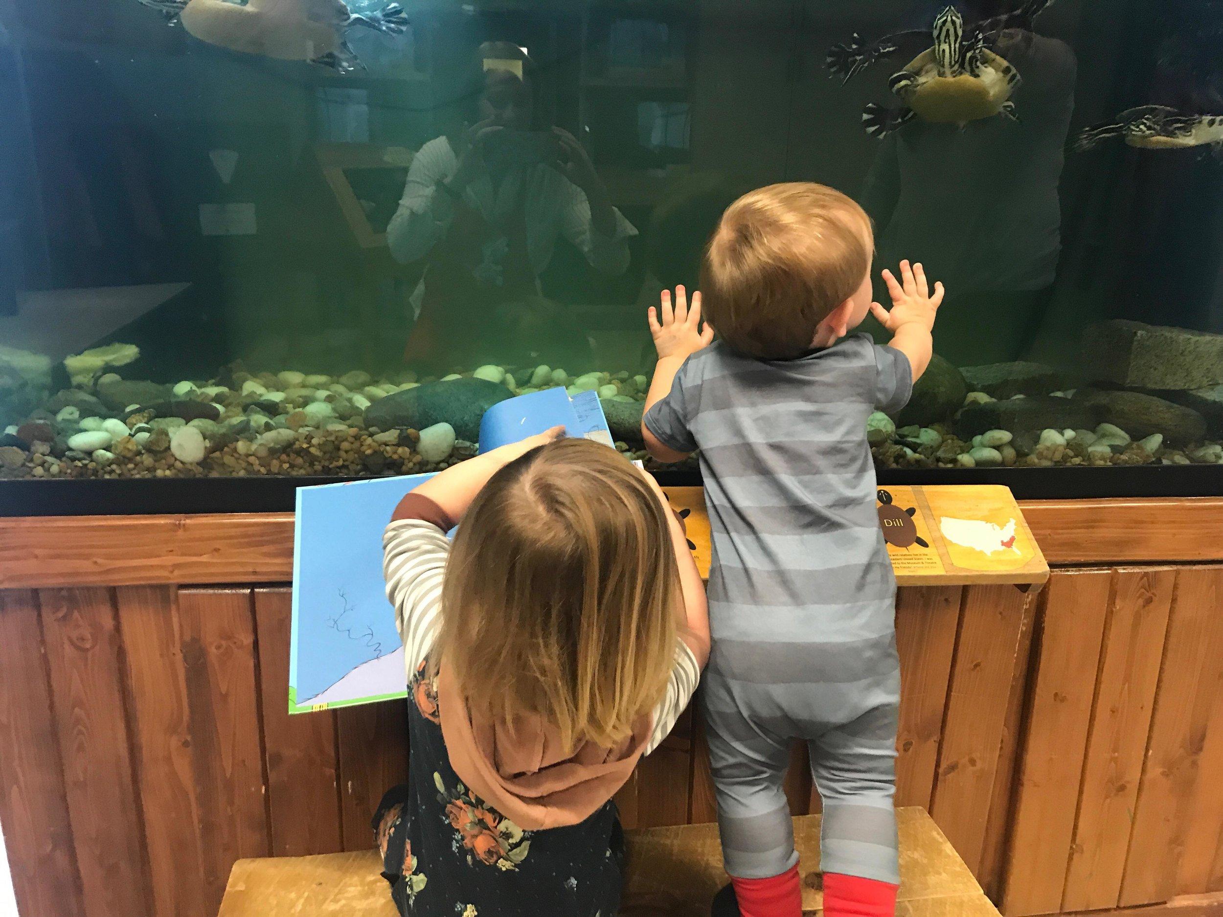 Children look at turltes in Ranger Station.jpg