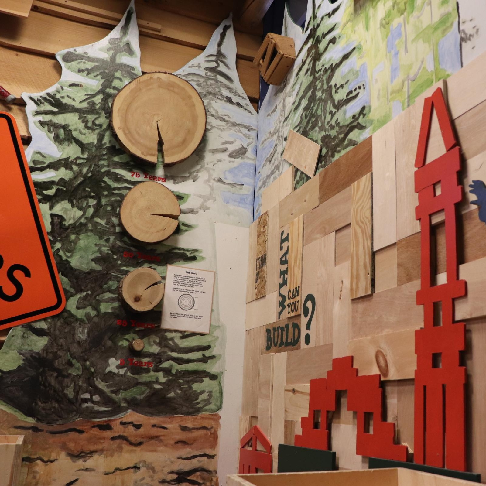 Tree to Timber - Tree to Timber shows kids the process of sustainable forestry.