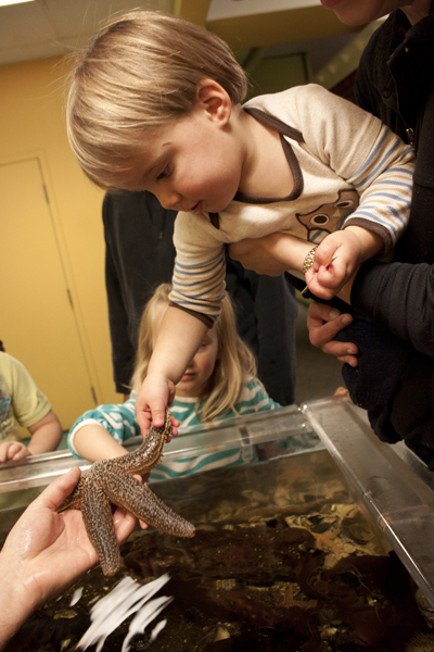 Child touches Sea Star in Touch Tank (Photo by Olivia Birdsall).jpg