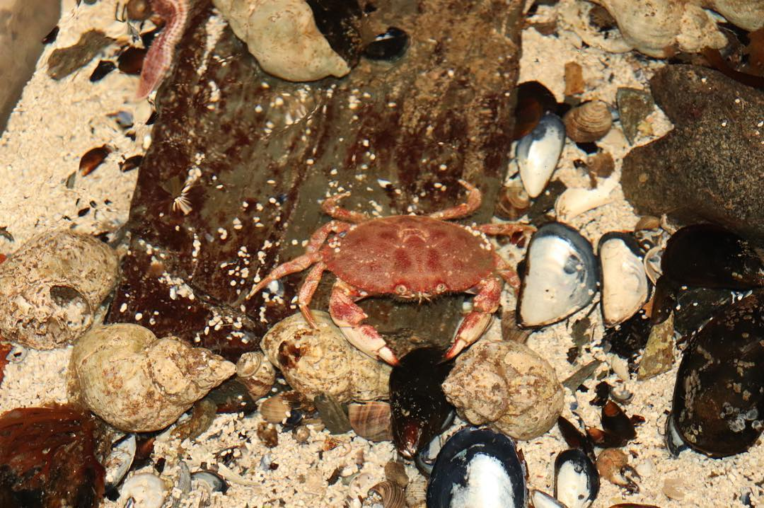 Crab in Touch Tank (Photo By Simone Verria).jpg