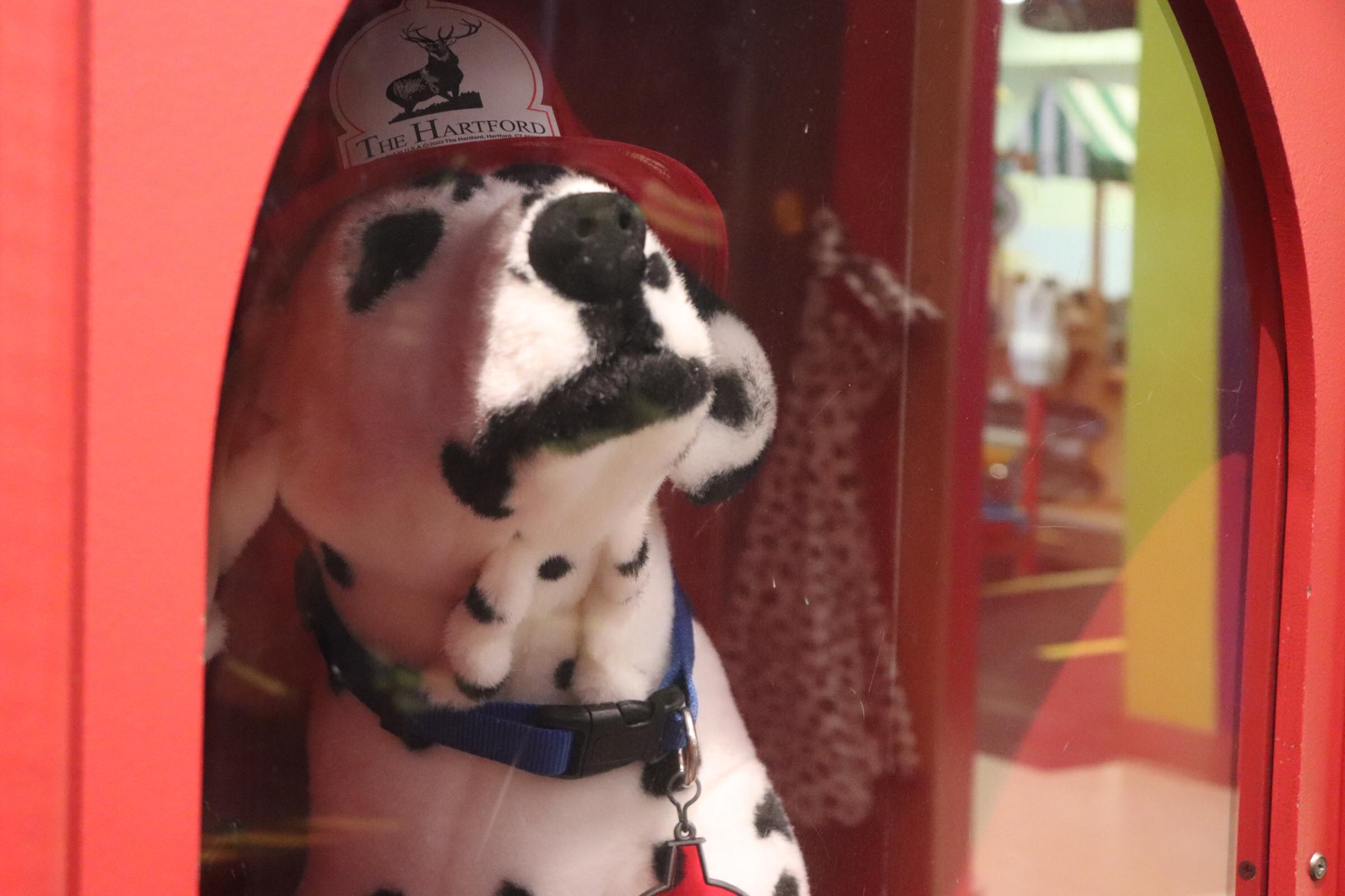 Dalmation on display in Fire Truck (Photo By Simone Verria).jpg