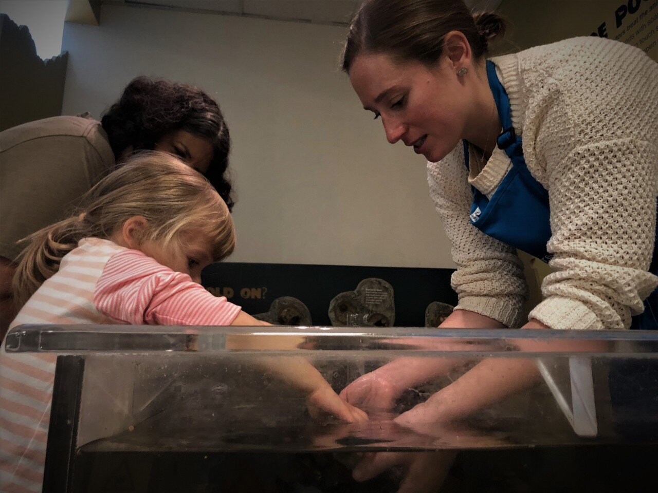 Children's Museum & Theatre Educator Samantha Connelly offers a Casco Bay Touch Tank program.