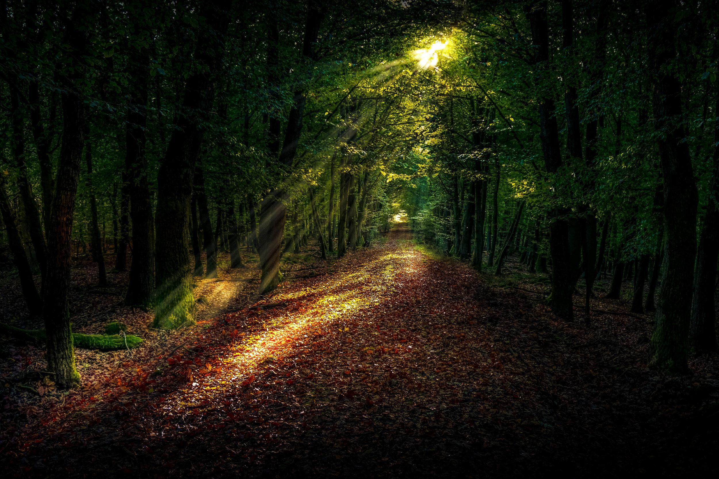 landscape-tree-nature-forest-path-grass-1417529-pxhere.com.jpg