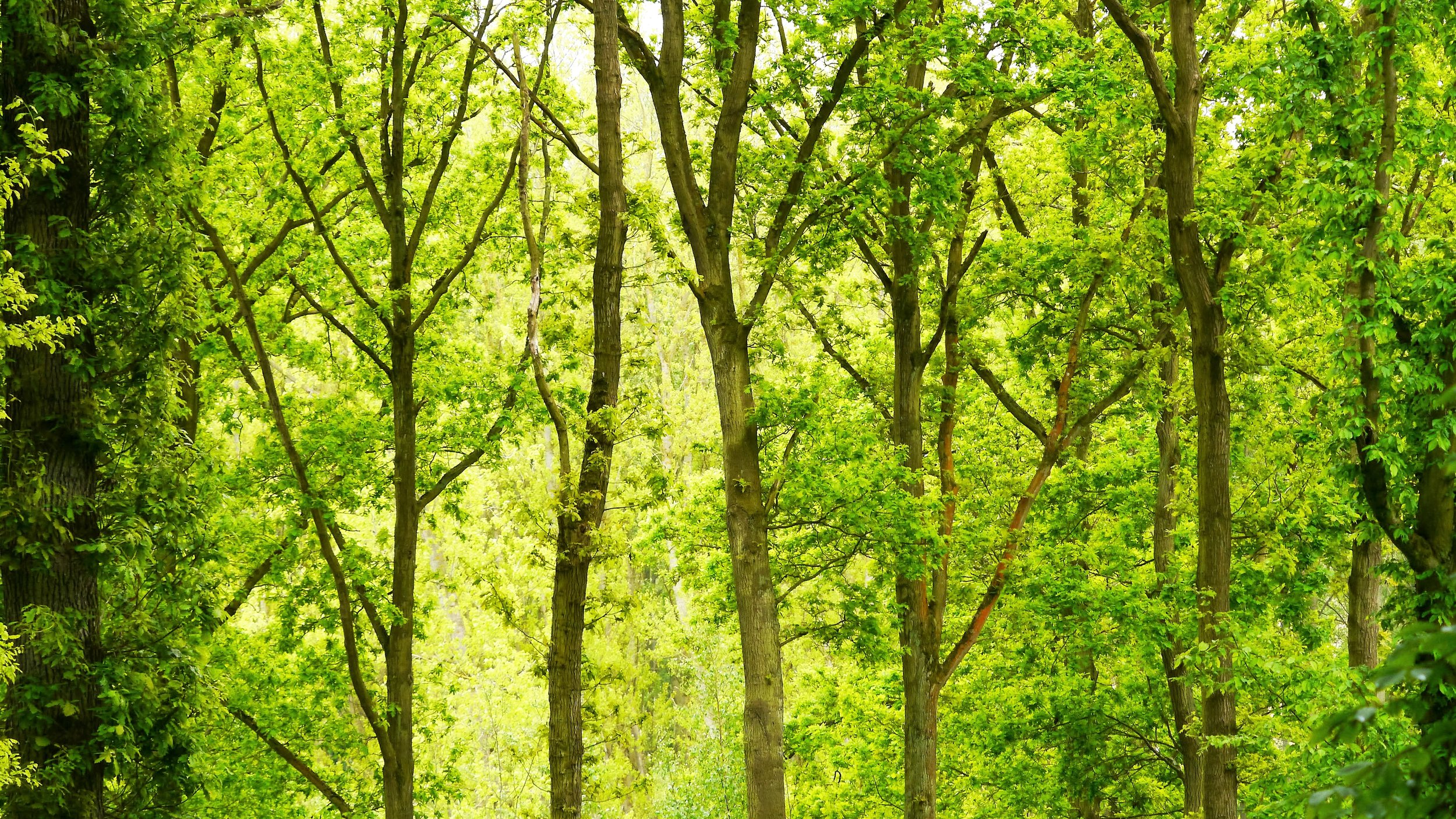 green-forest-daytime-trees-brussels-tree-1576721-pxhere.com.jpg