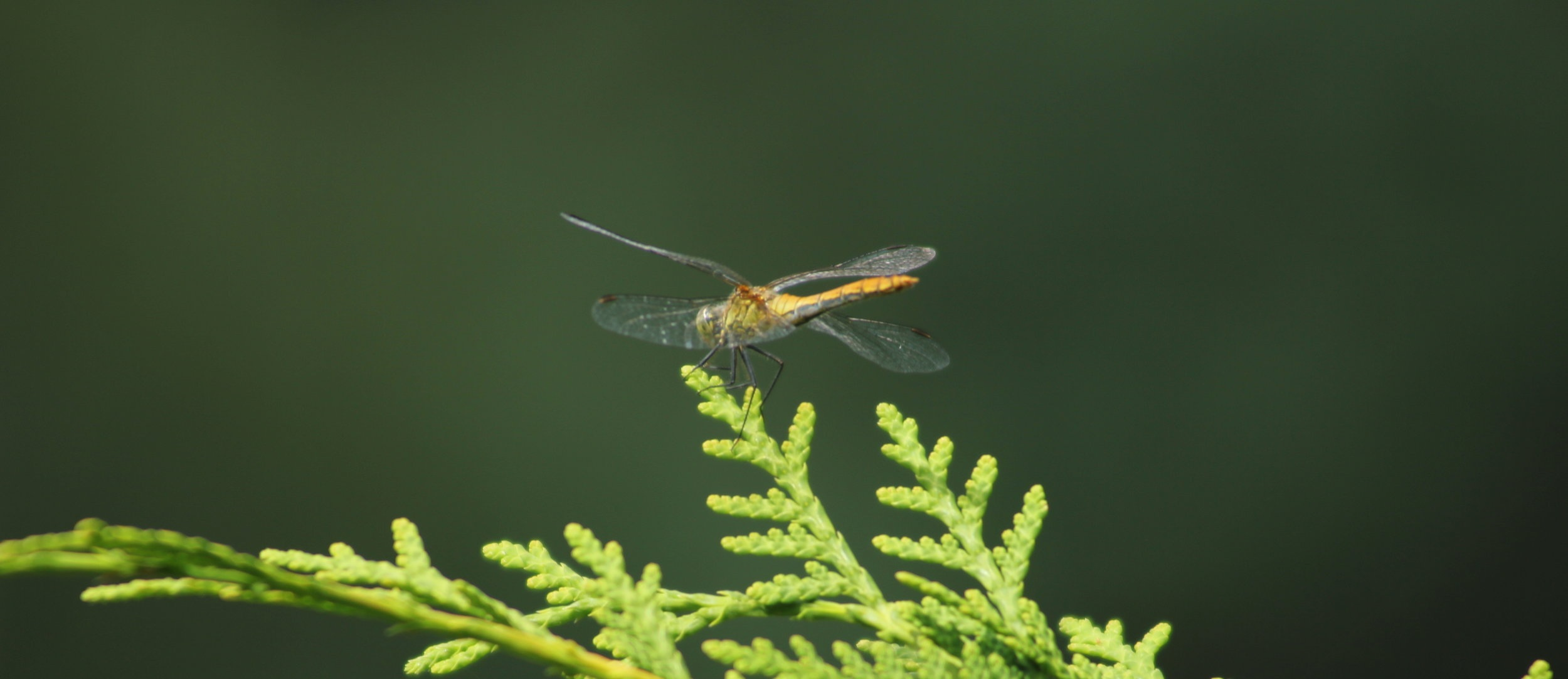 nature-insect-macro-photography-invertebrate-close-up-organism-1425037-pxhere.com.jpg