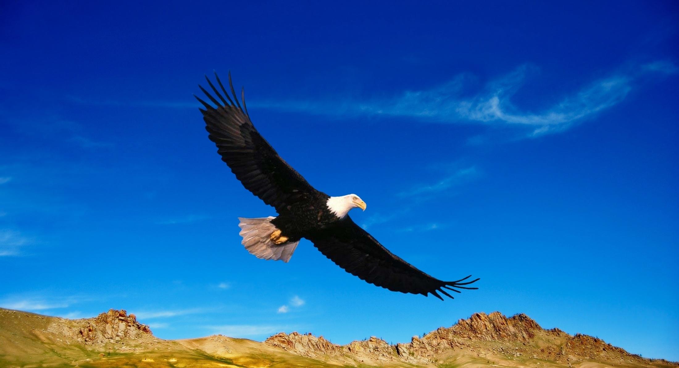 nature-bird-wing-sky-prairie-fly-677705-pxhere.com.jpg