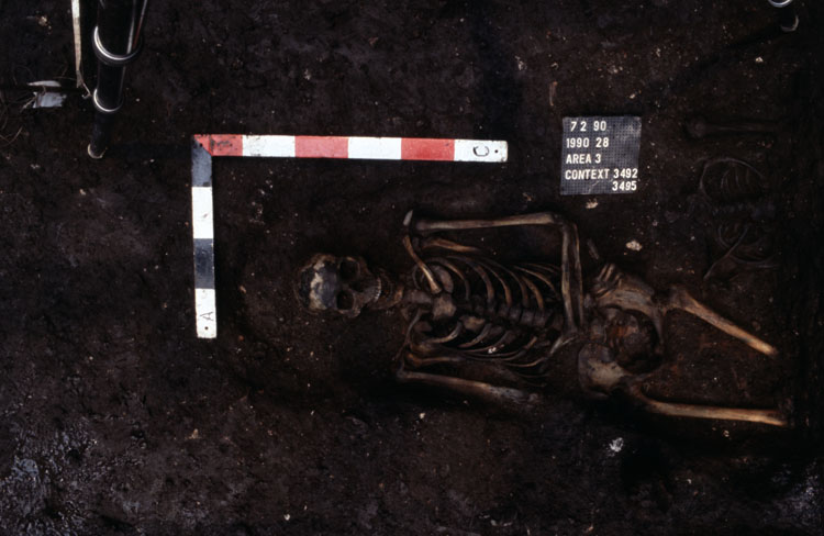 Skeleton 3492 and 3495 (uppermost skeleton) showing the staining on bones, St Benet's.jpg