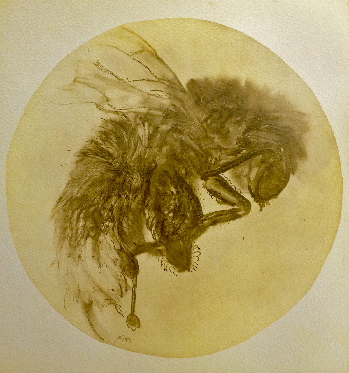 bee etching 1 copy.jpg