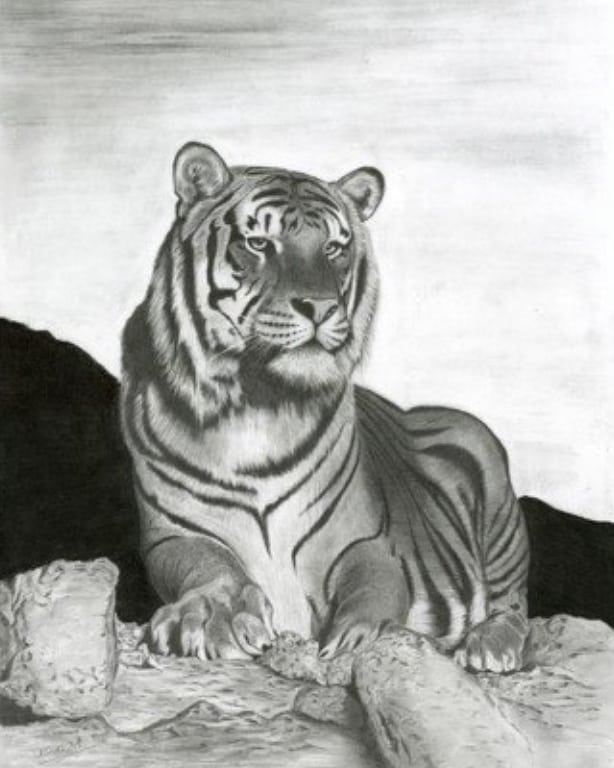 A very skilled drawing by Kern - thank you! 🐯