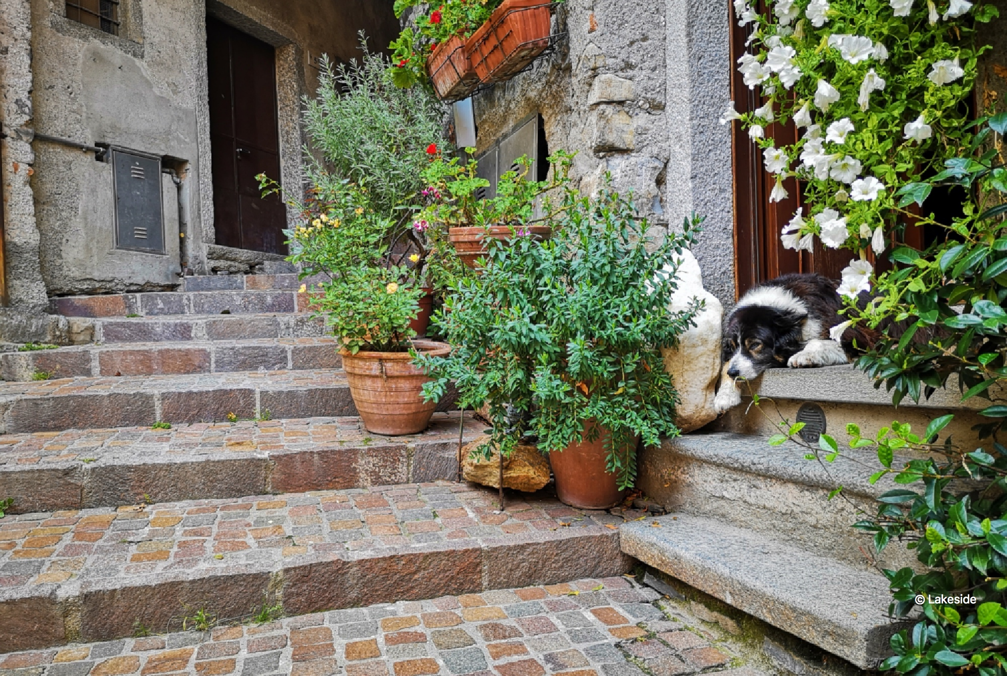 Our favourite dog, always having a nap at the entrance of that beautiful house