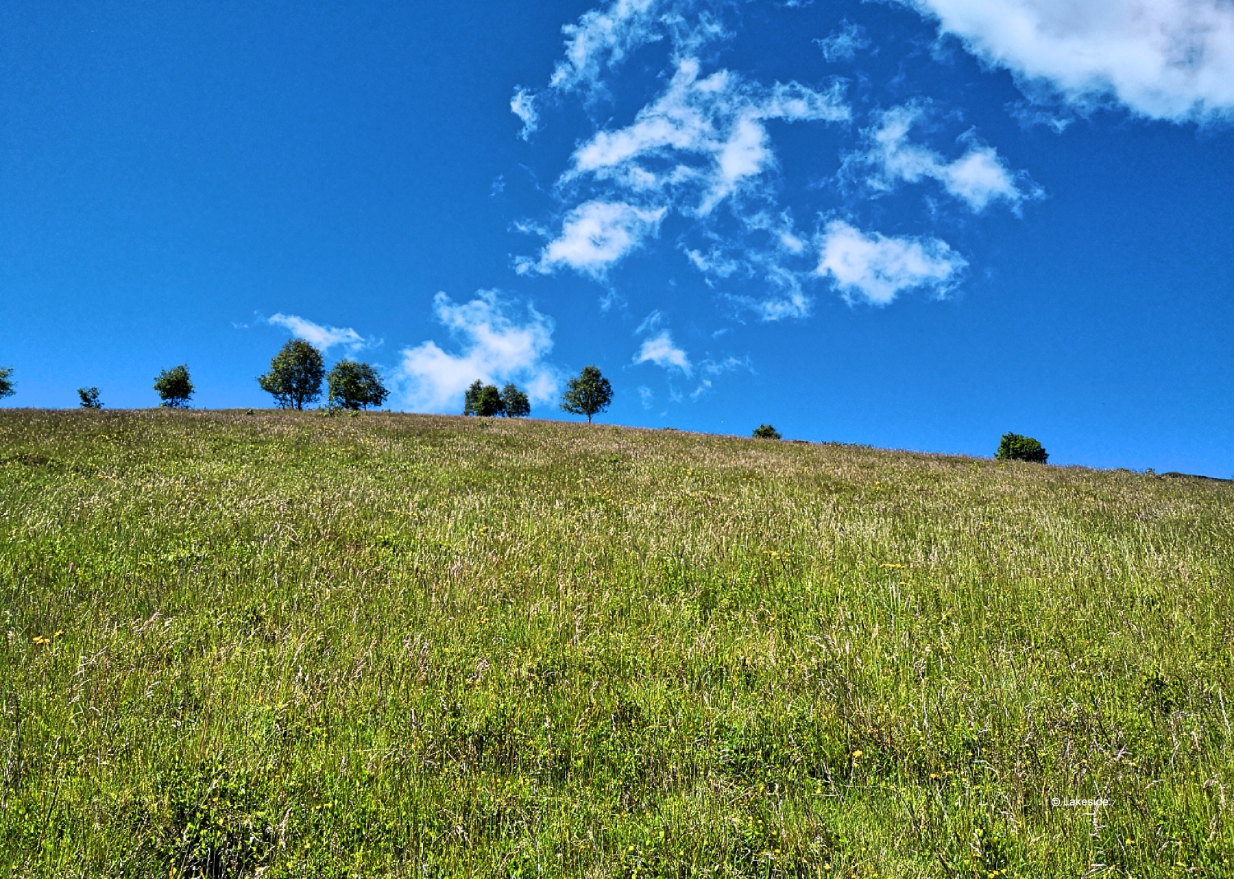 The grassy hills along the Sentiero basso