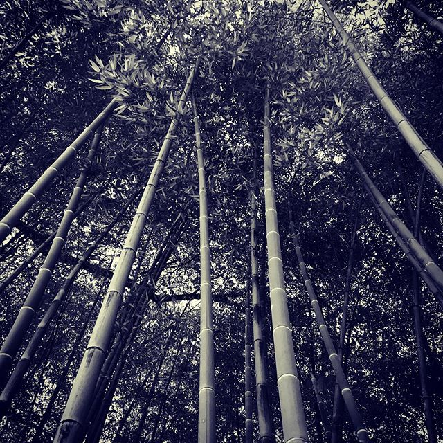 🎋🎋🎋🎋Bamboo is the future 🎋🎋🎋🎋🎋🎋🎋🎋🎋#offgrid #bamboozled #inspiration