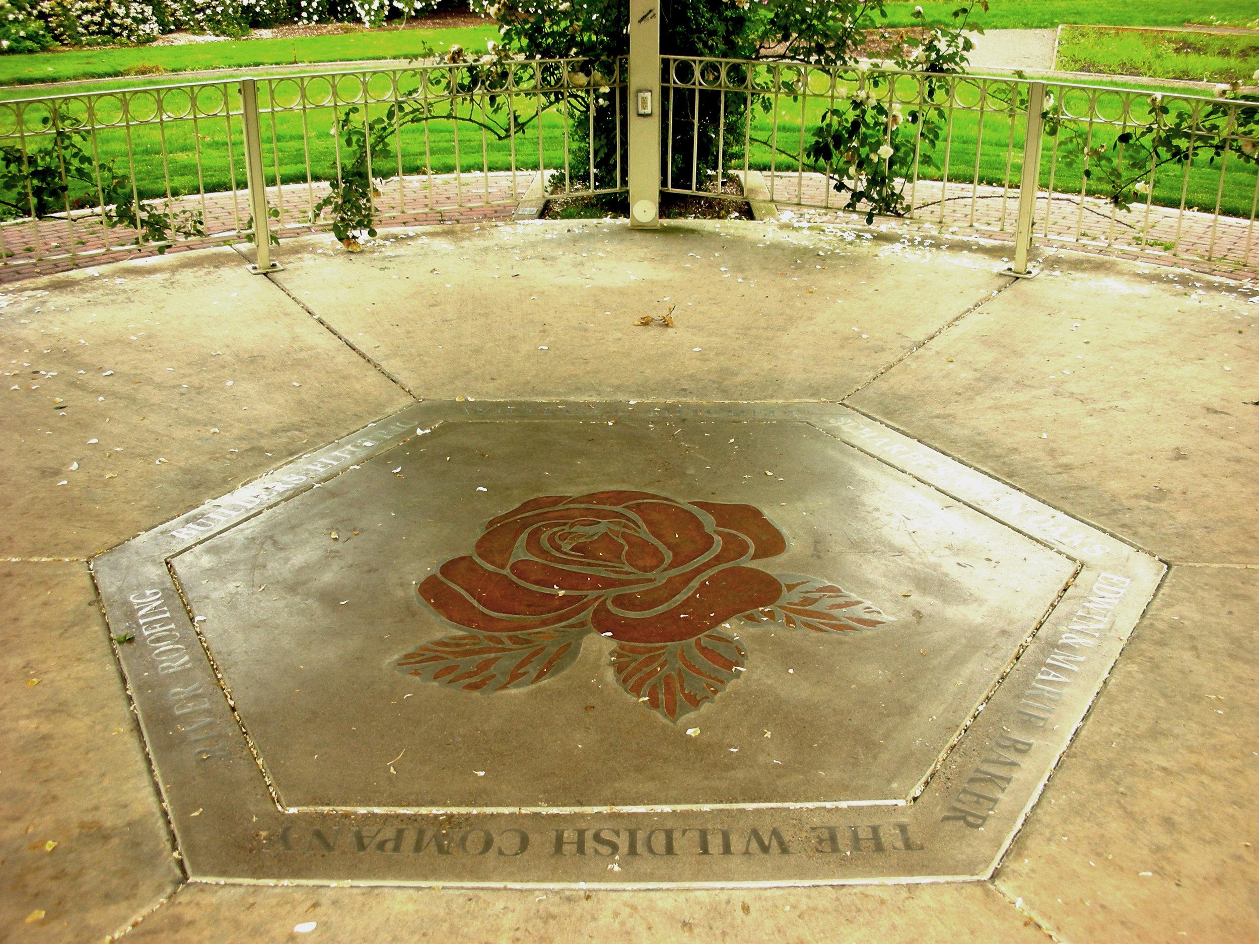 Eugene Rose Garden Rose