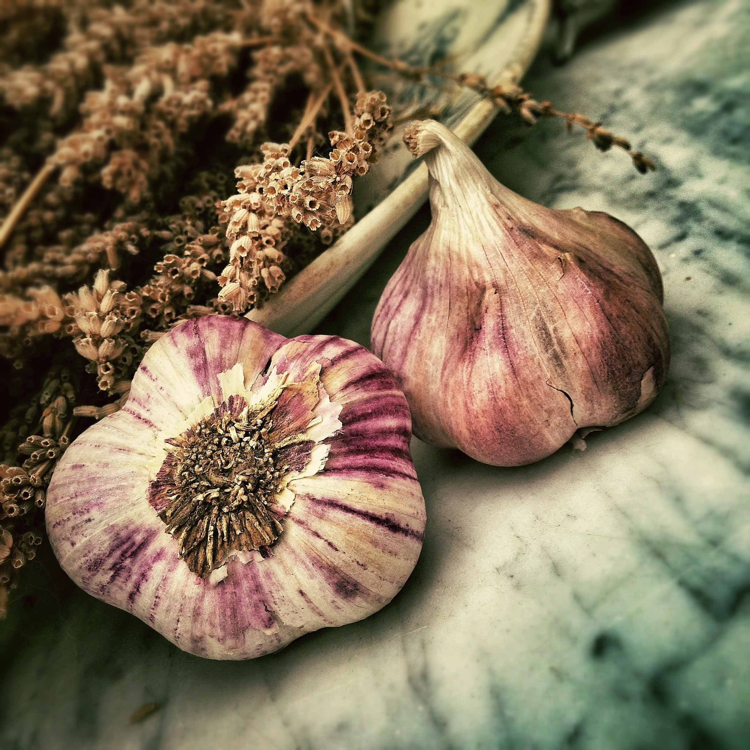 Garlic feeds the good gut bugs in our gut and kills the bad. The good bugs improve our health and the bad bugs worsen our health.