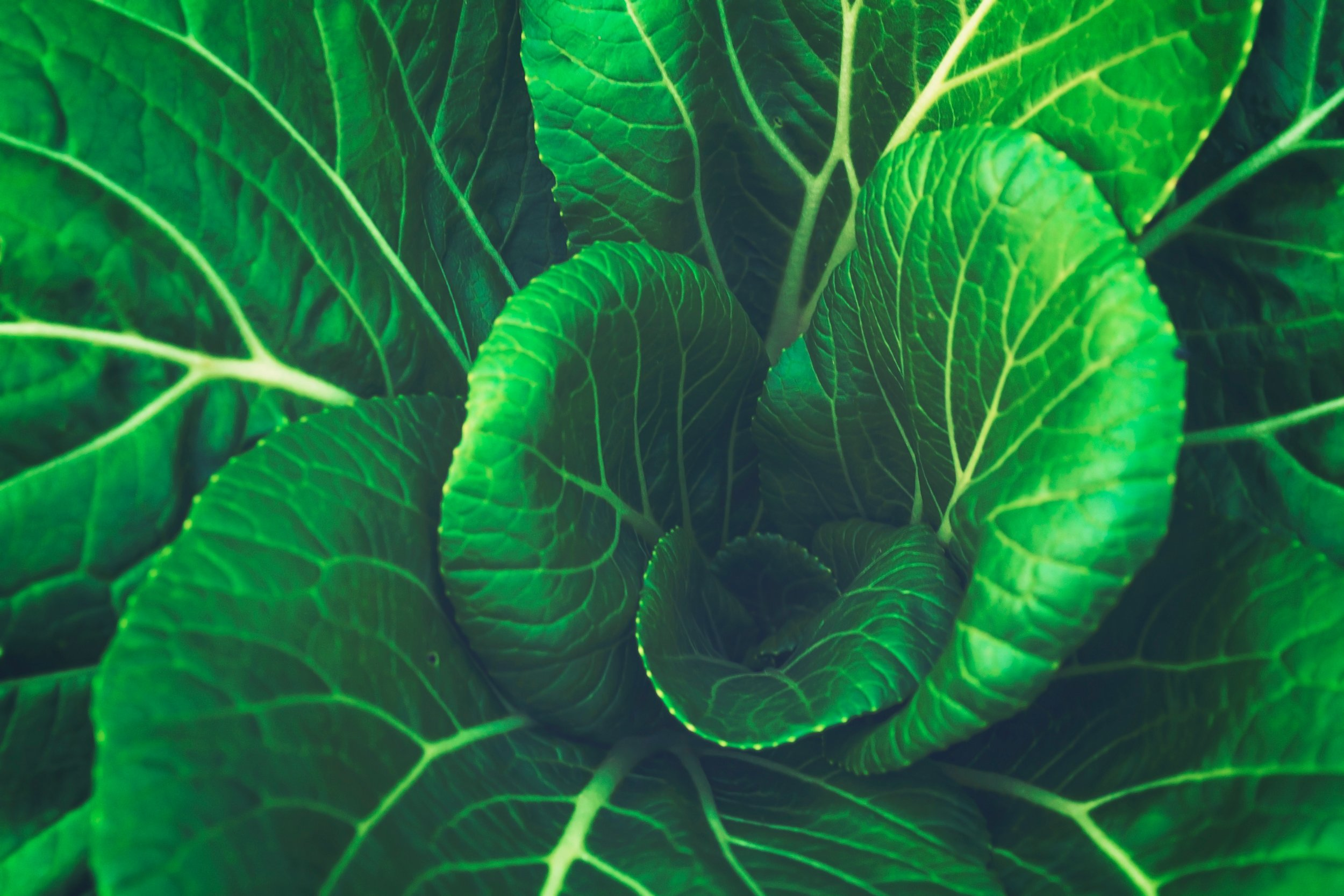 Dark leafy greens reduce inflammation, associated with most disease.