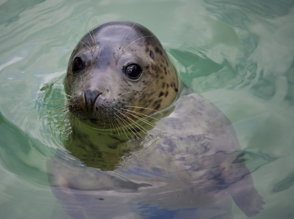 CORNWALL SEAL SANCTUARY - GWEEK