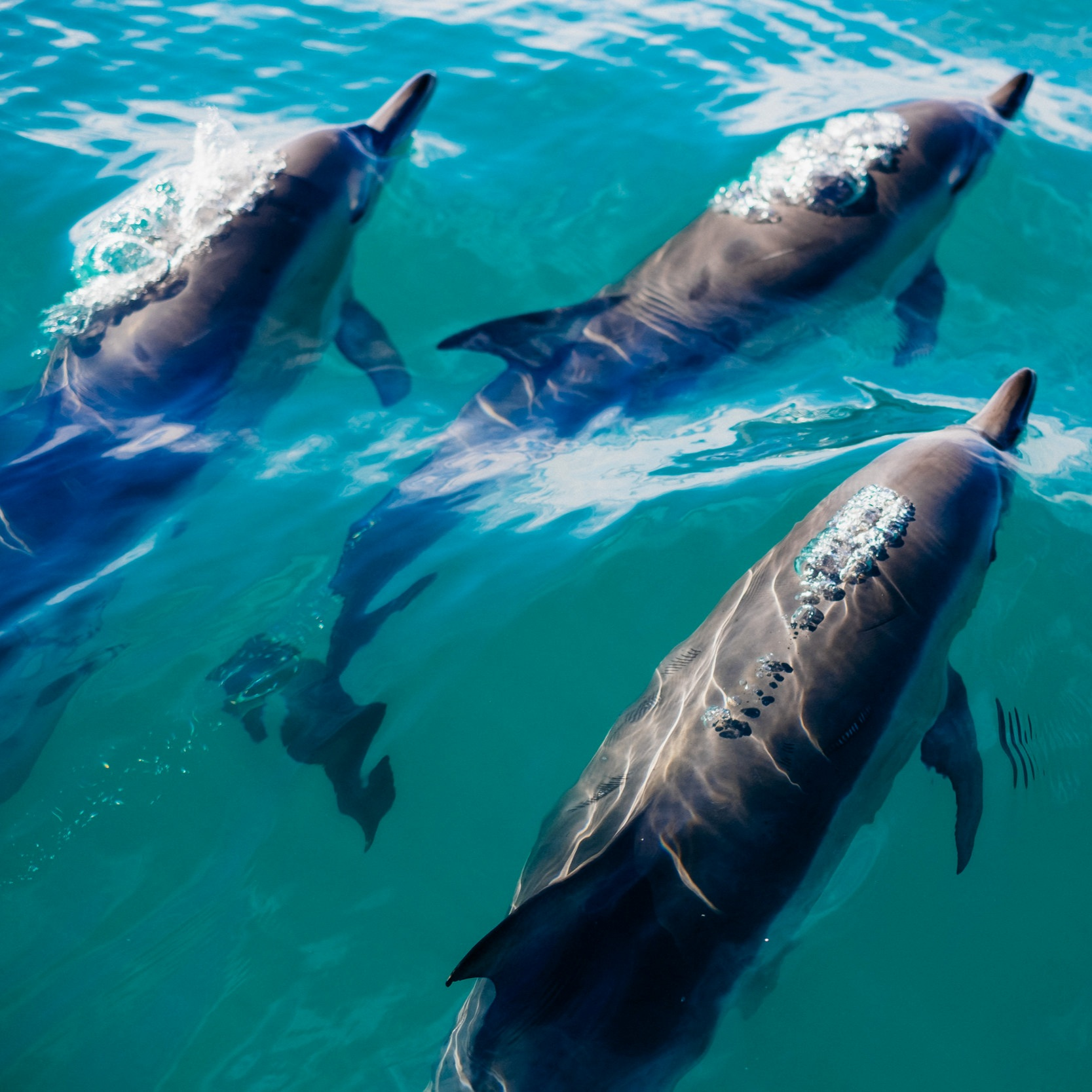 Crab+Island+Dolphins.jpg