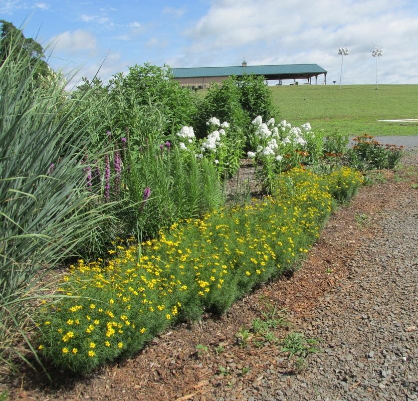 Lenn+Park+Pollinator+Garden.jpg