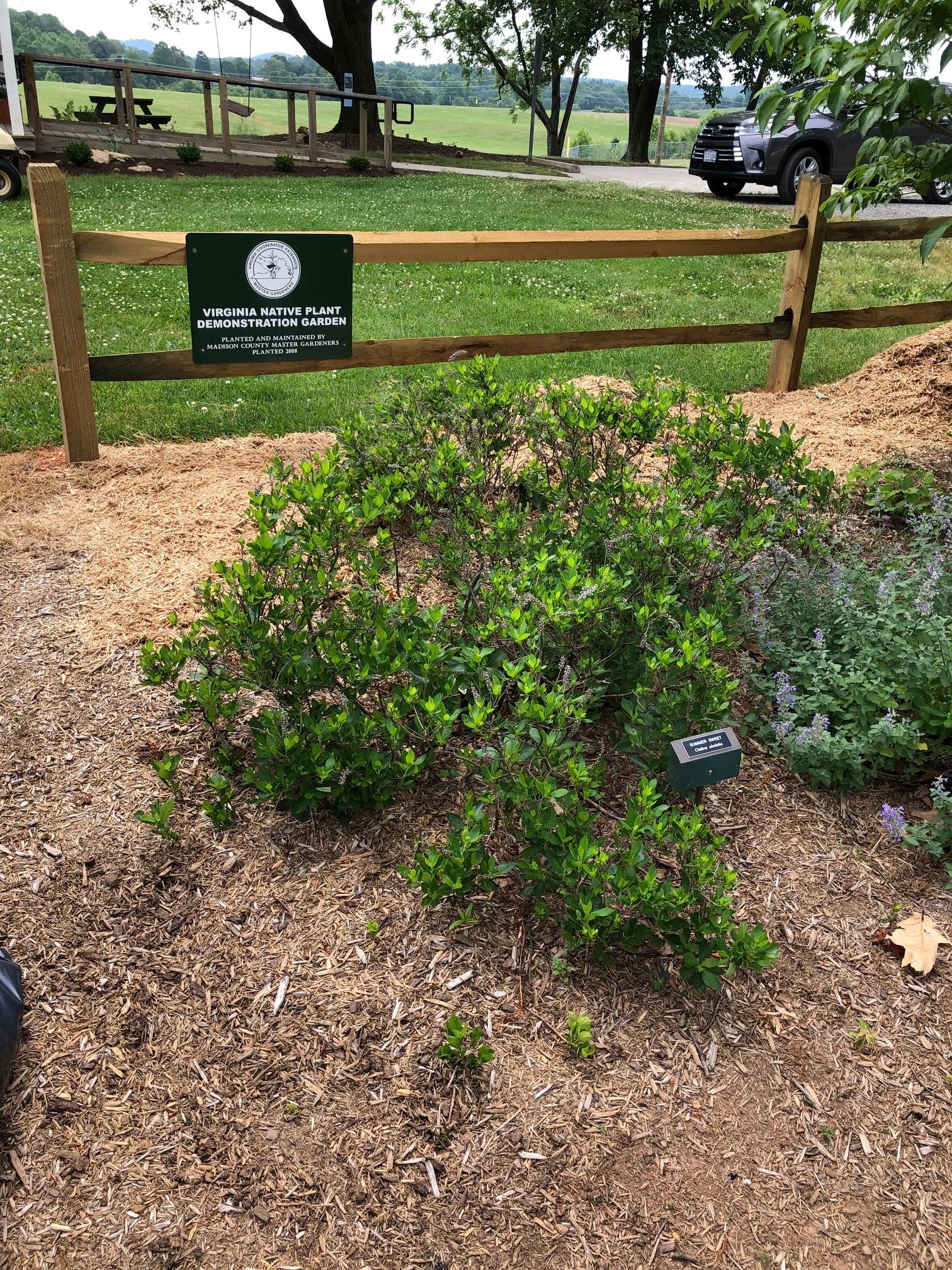 Native Demo Garden 6 6-2-19.jpg