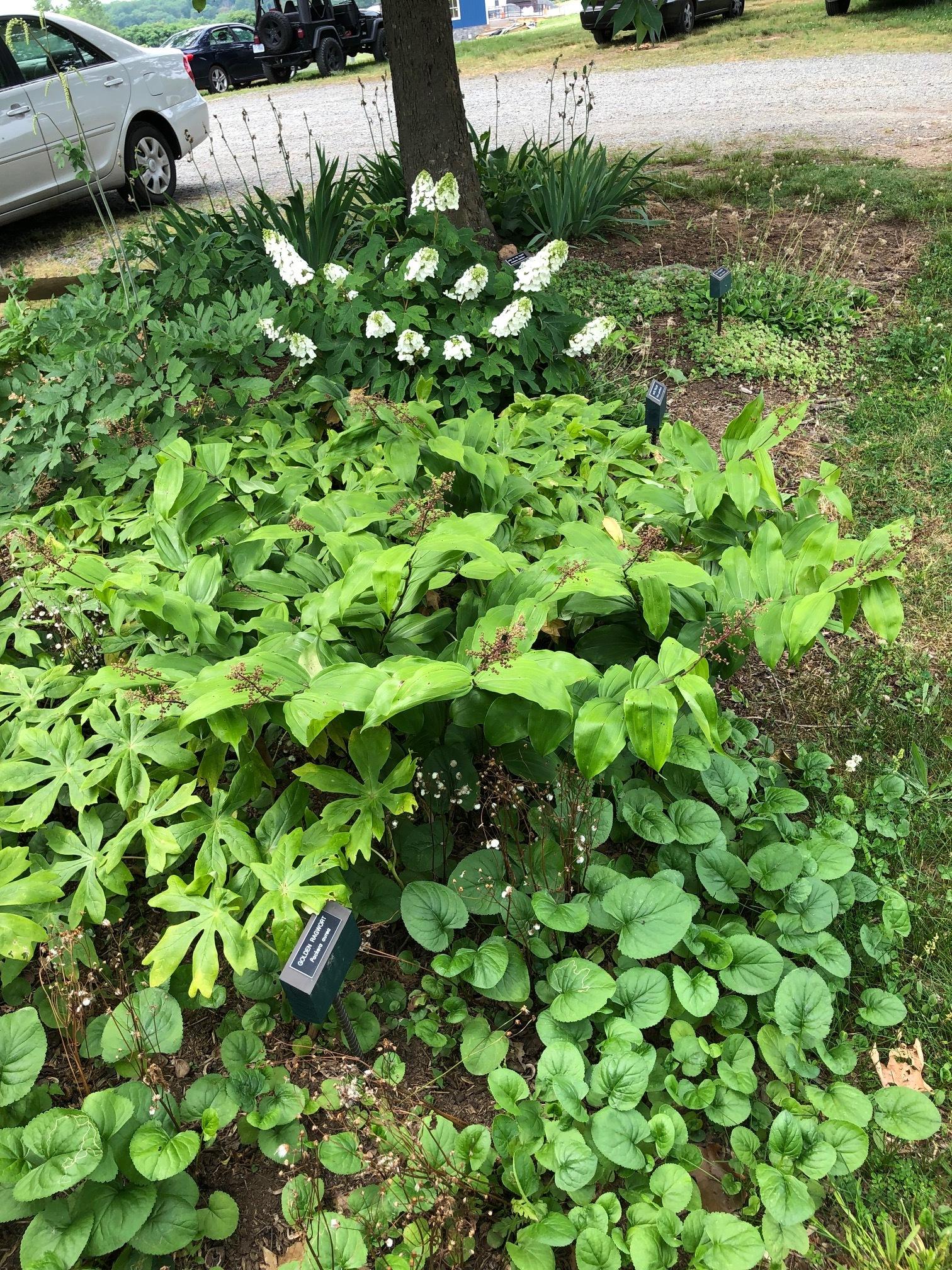 Native Demo Garden 7 6-2-19.jpg