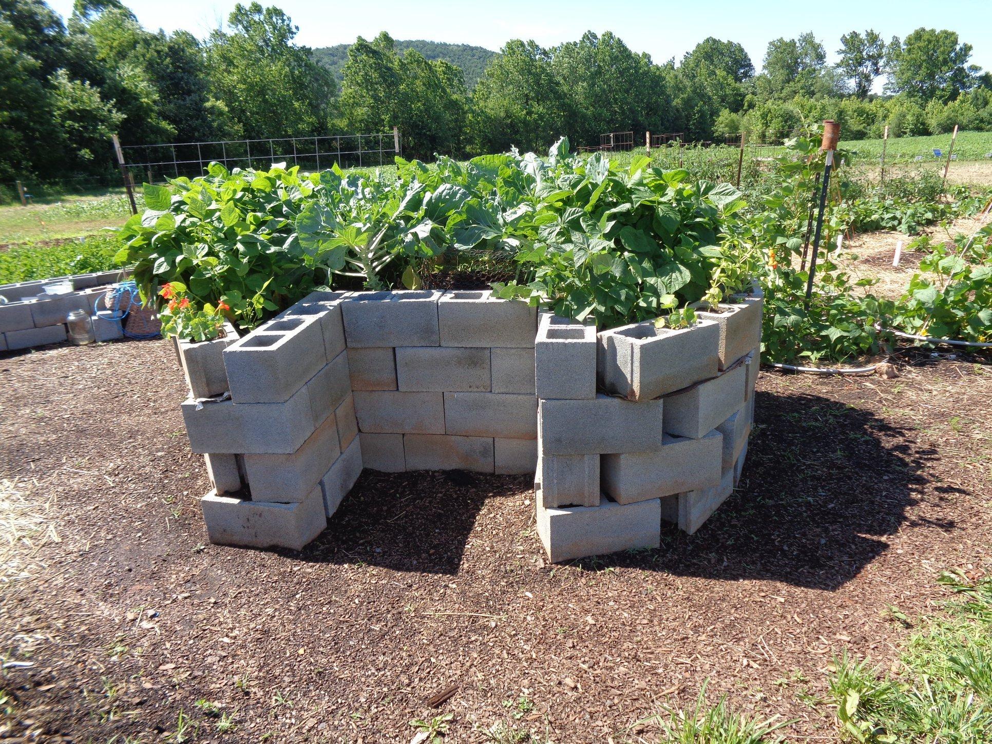African Keyhole Garden at Vegetable Demo Garden