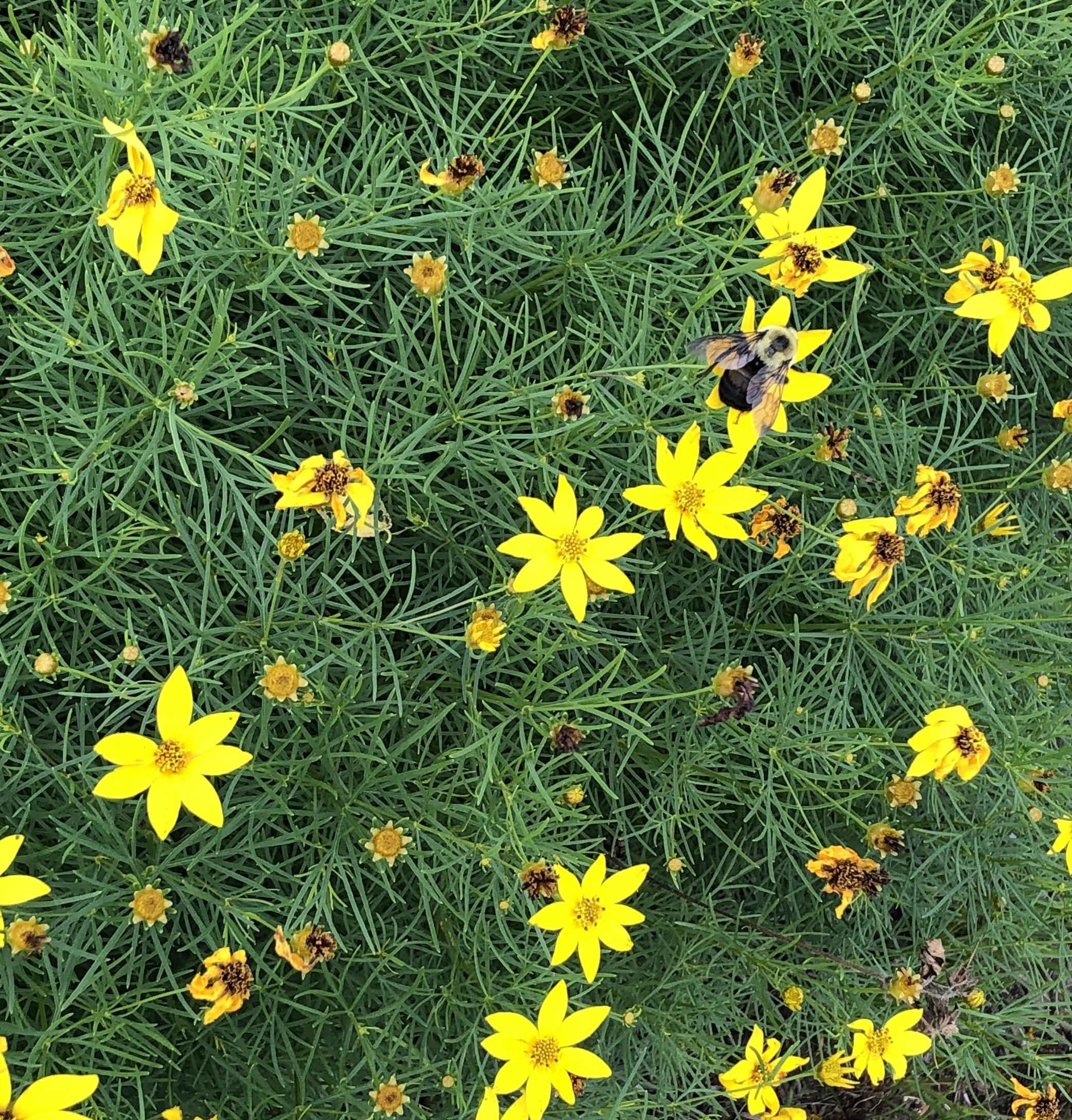 Greene Pollinator Garden