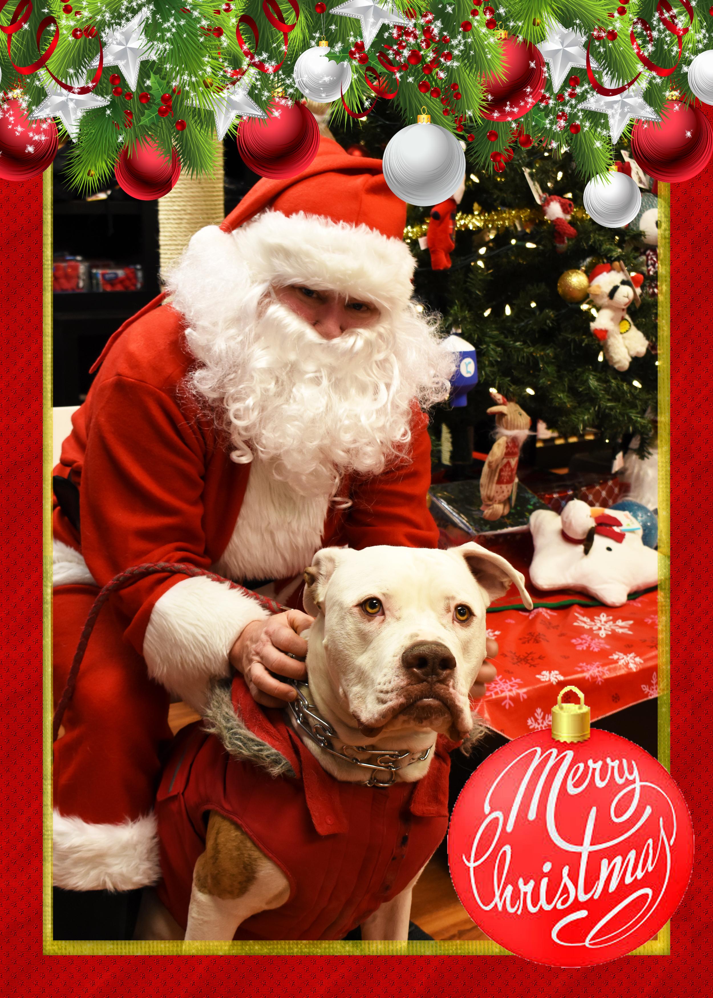 brutus_with_santa.jpg