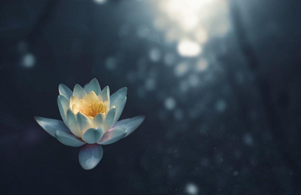 Yoga Synthesis Meditating with Qi Alane OHagan and Beth Erben Chestnut Ridge image.jpg